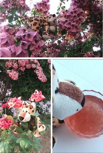 Rumli felfedezi a kertet, rózsaszirmot szed lekvárnak, majd kiábrándultan ül a lekvár előtt.