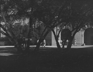 Looking toward Frary through the Bixby Courtyard trees in 1957