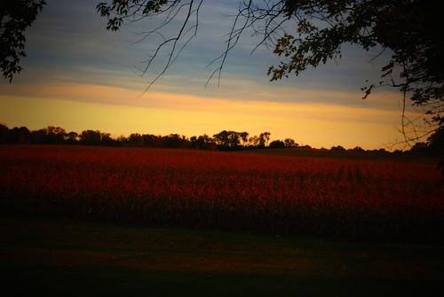 sunset ohio summer sky nature field clouds evening corn backyard dusk farm sony country september alpha 2012 a230 fairfieldcounty stoutsville ohiofoothills
