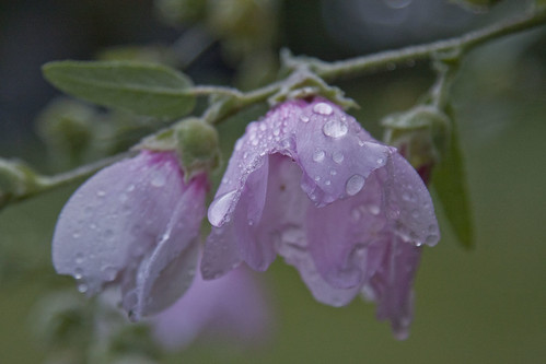 Dew touched flowers