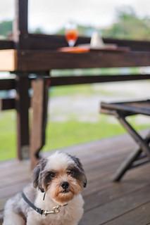 Dog @ a cafe_カフェのワン子