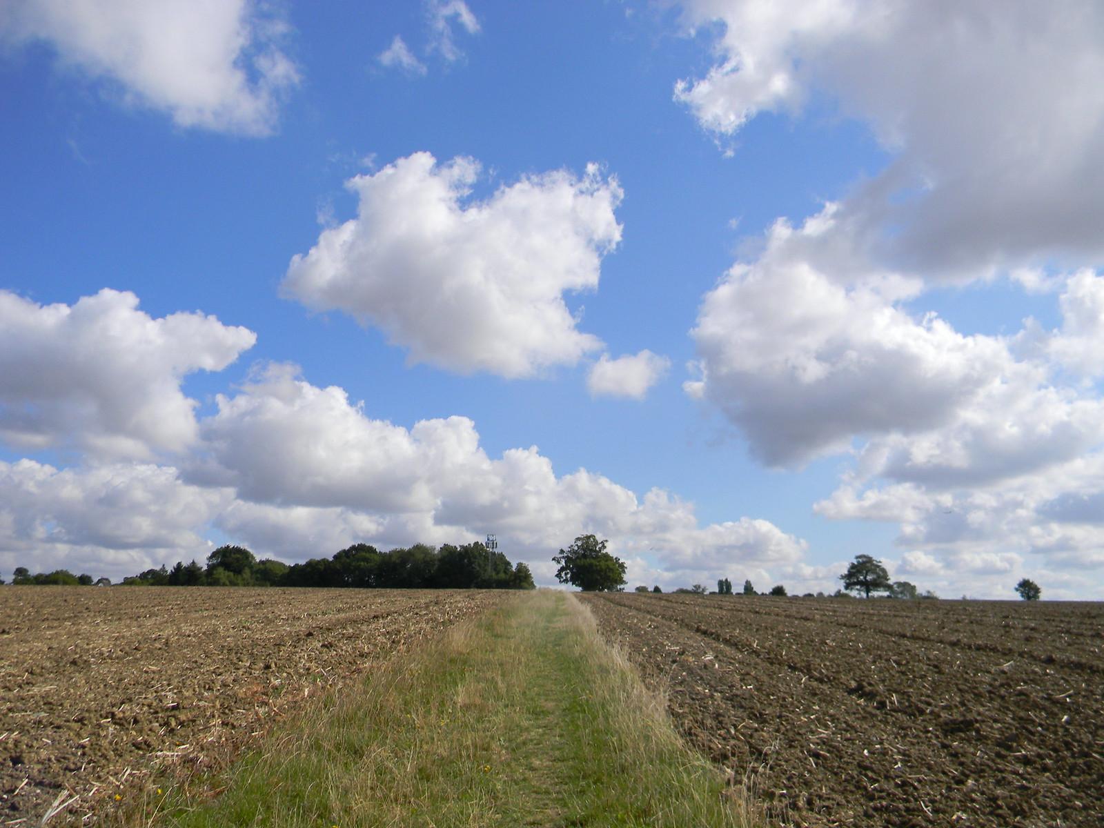 grassy path Roydon to Sawbridgeworth