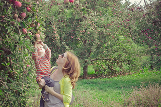 Apples-0166
