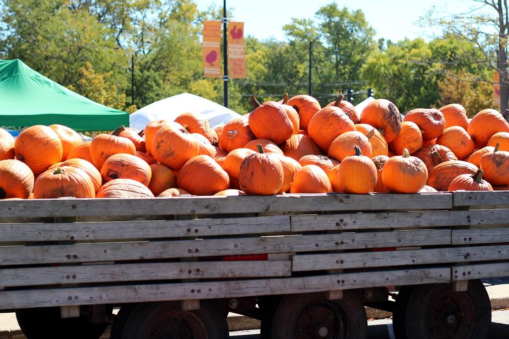 Pumpkin Galore!