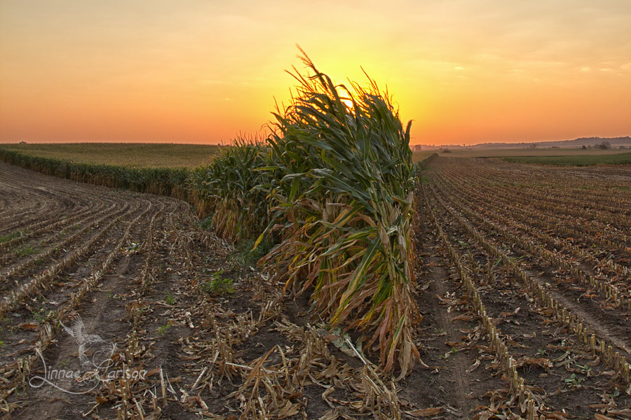 Sun sets over the Corn Wedgie