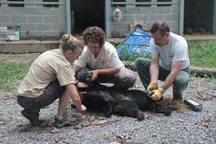 Black Bear Release July 2012