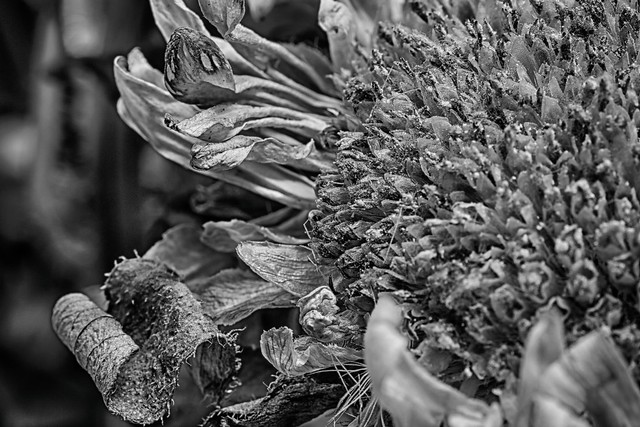 Wabi-Sabi 28/365 | Flickr - Photo Sharing!