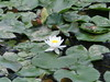 un fiore al centro