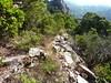 Un chemin datant du 18ème siècle recouvert par le maquis dans le Haut-Cavu