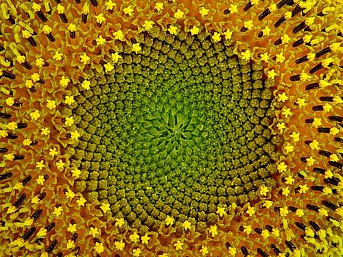 [フリー画像素材] 花・植物, 向日葵・ヒマワリ ID:201210060600