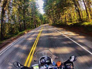 Oregon-California Border.  Redwood Highway, CA.