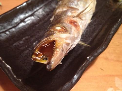 焼き魚カマスだったかな。@すし屋魚真 下北沢店