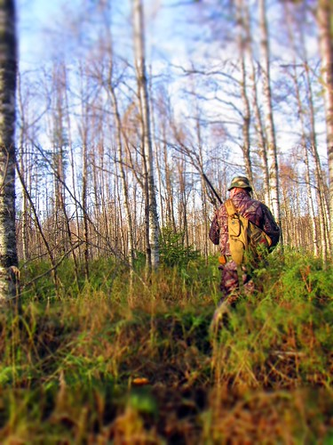 autumn trees sky nature hat forest gun hunting backpack hubby birch