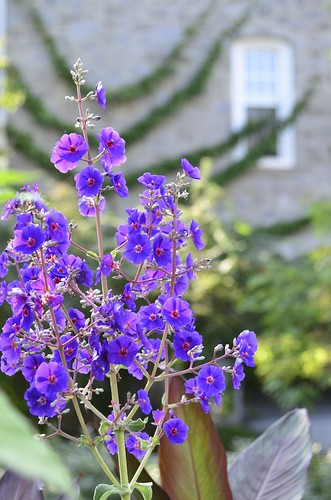 flower college landscape nikon purple violet nikkor nikond7000 24120mmf4gvr