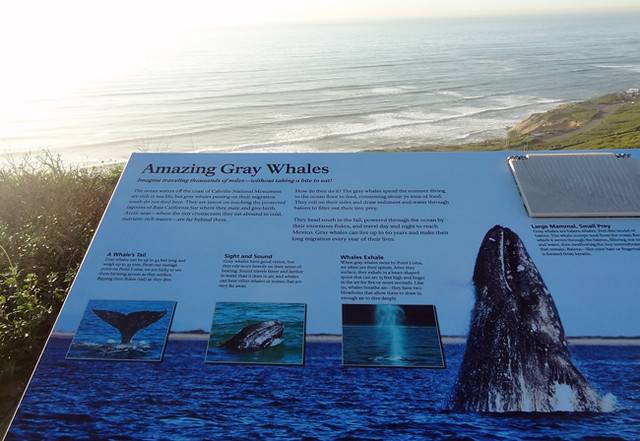 gray-whale-sign