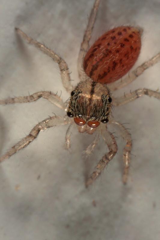 20120819_175347_spider