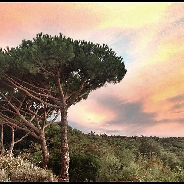 Finalmente ho trovato la connessione per postare il tramonto di ieri sera :-) #maremma #tuscany #follonica #tuscanygram