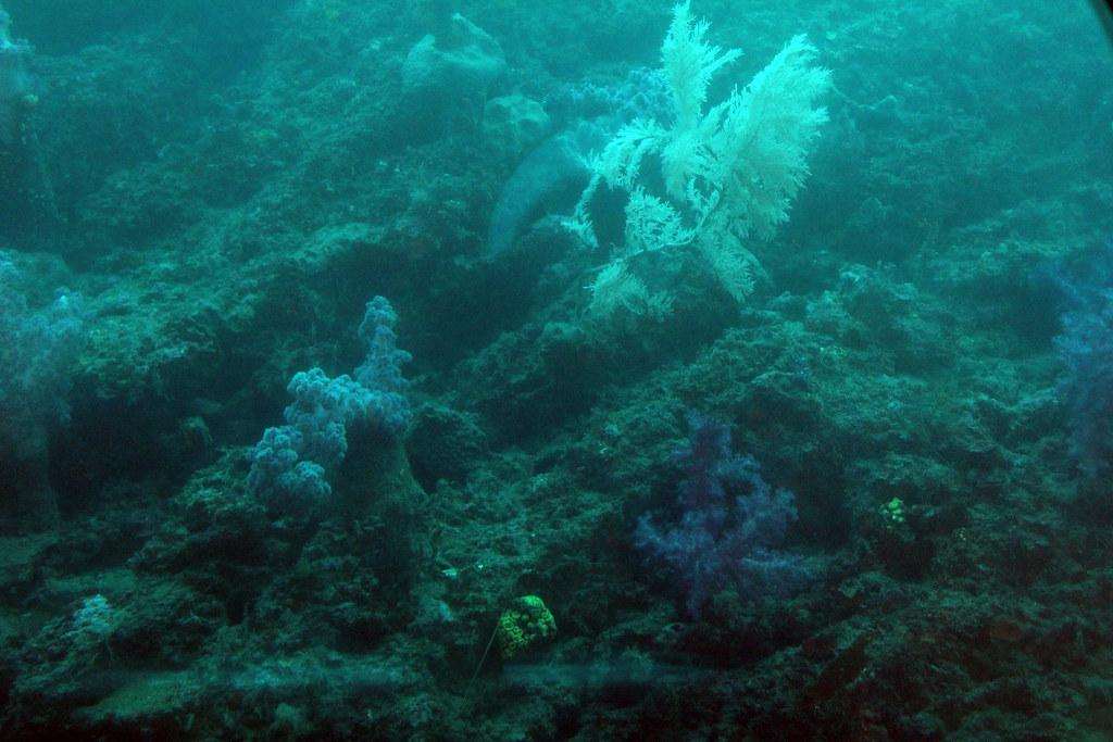 Jeju ocean