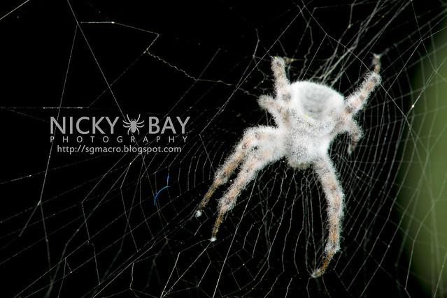 Spider in Fungus - DSC_6427