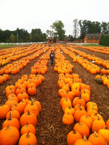 Where is the Great Pumpkin?