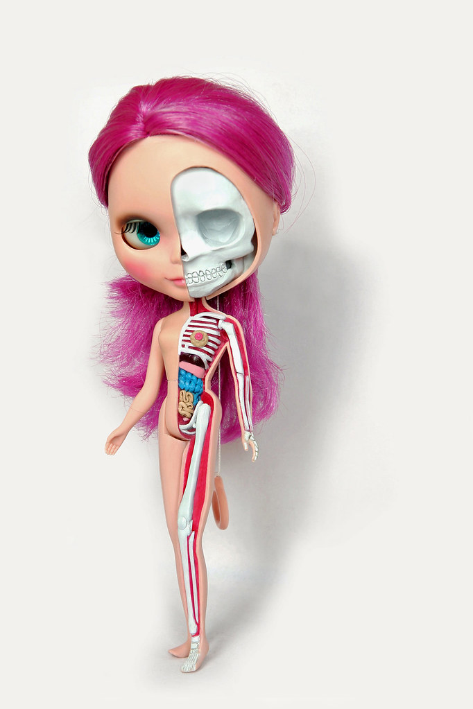 Blythe Doll Anatomy - a photo on Flickriver