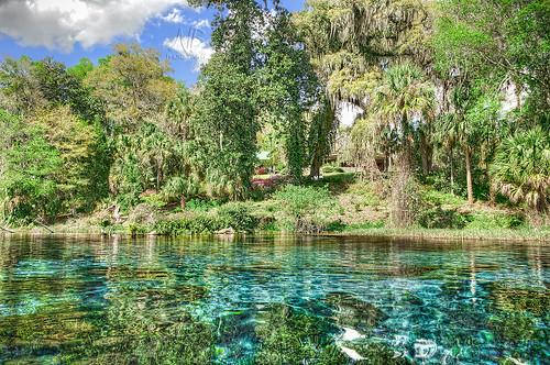 trees water river landscape nikon florida springs fl hdr highdynamicrange springwater headwaters rainbowriver d90 pseudohdr hdrphotography nikond90 rainbowspringsstatepark