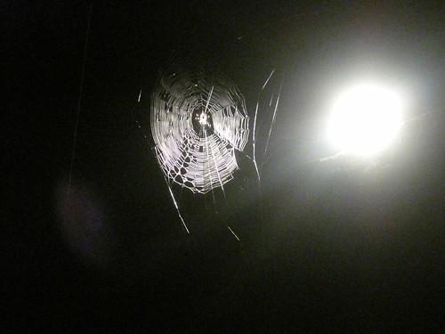 glam spider