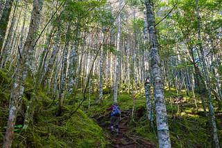 シラビソ樹林の苔むした登山道