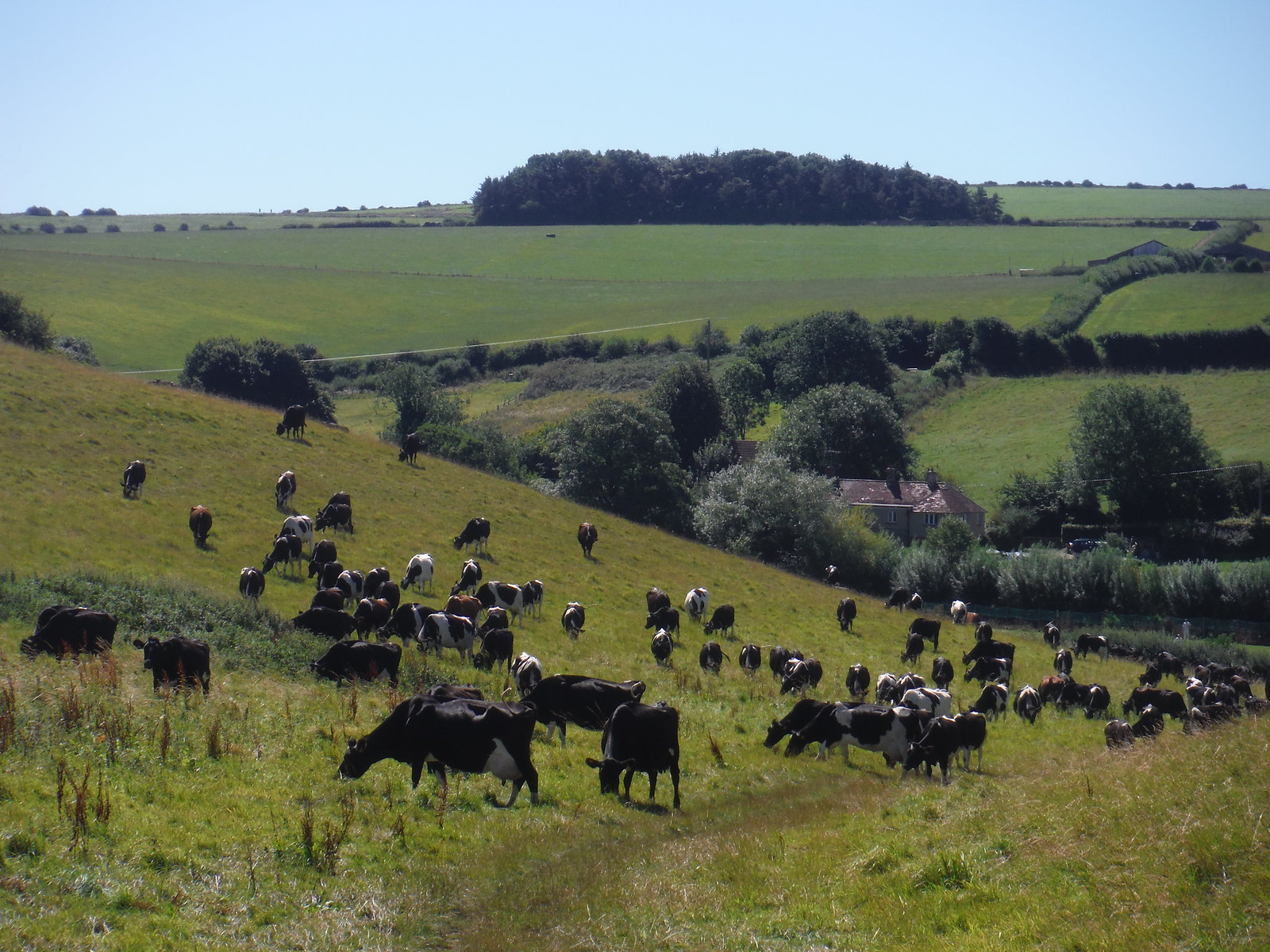 Between Maiden Castle and Hog Hill SWC Walk 275 Dorchester South Circular or to Portesham