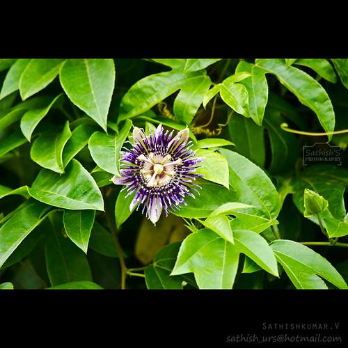 Some Rare Flower