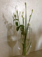 水, 2012-08-29 08:46 - ニラとミント