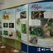 20120526 2012陽明山蝴蝶季-大屯遊客服務站(韓志武攝)DSC_3326
