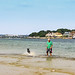 A man and his dog splash in Shell Bay, Dorset.  Poole Harbour and Sandbanks and its ferry in the background