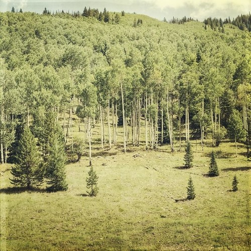 trees pine forest canon vintage square colorado afternoon meadow vail aspens hdr textured t1i applesandsisters