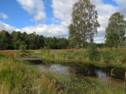 Heathland Pond