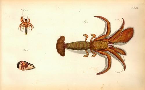 013-Â Versuch einer Naturgeschichte der Krabben und Krebse- 1790- Johann Friedrich Wilhelm Herbst- Humboldt University