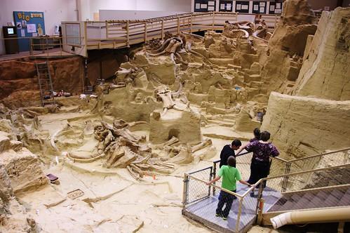 iceage southdakota mammal fossil head paleontology mammoth bones bone prehistoric mammals dig fossils tusks hotsprings tusk mammothsite mammoths hotspringssouthdakota digsite paleontological