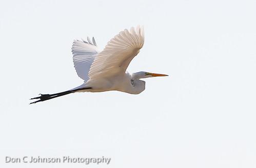 Bird-7915
