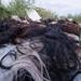 JAL12TRHS02-9756 por TheAnimalDay.org