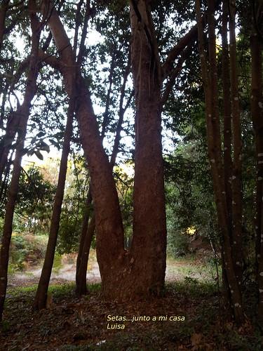 ...en el bosque de Agua García...