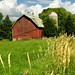 Barns of Carver County, MN