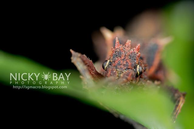 Stick Insect (Phasmatodea) - DSC_8791