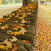 leavesFoliage in Cooperstown, New York4
