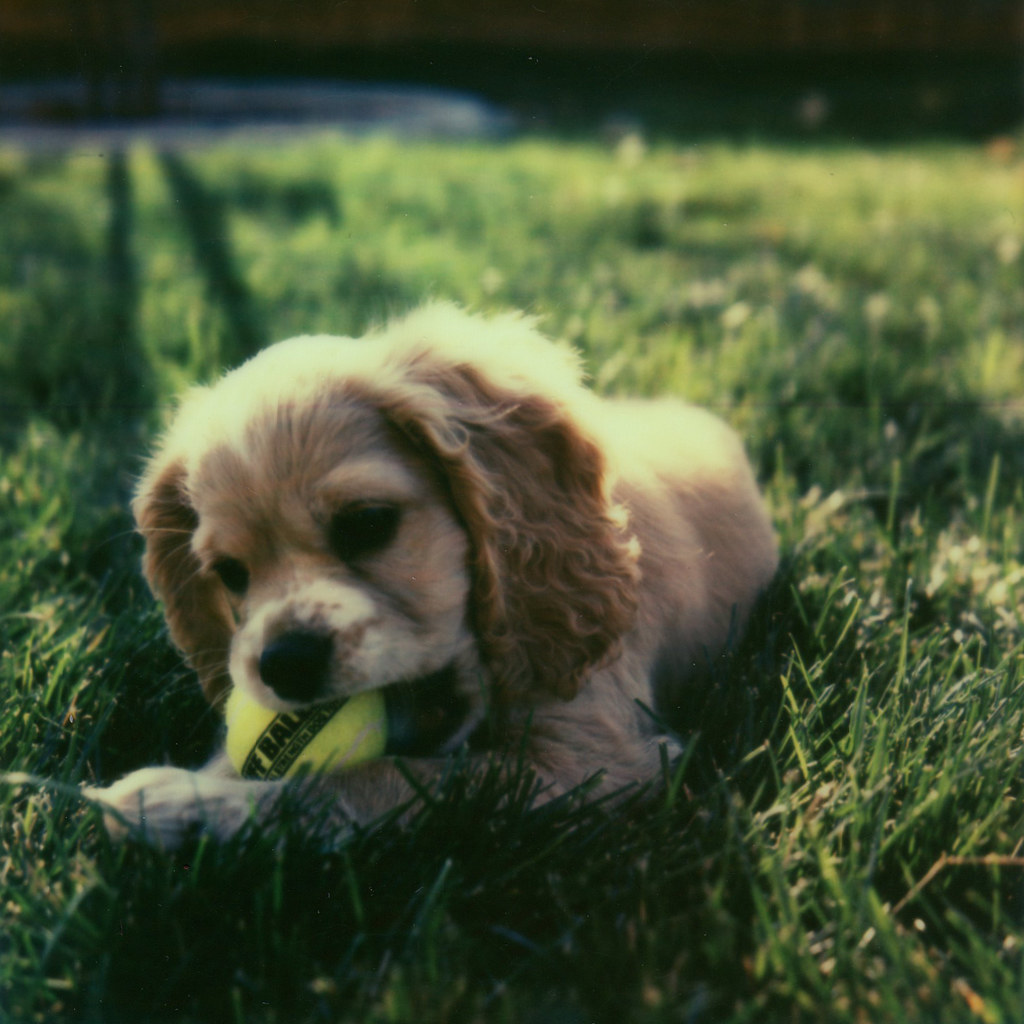 puppy love px70 opac test