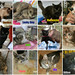 September adoptions by Goathouse Refuge