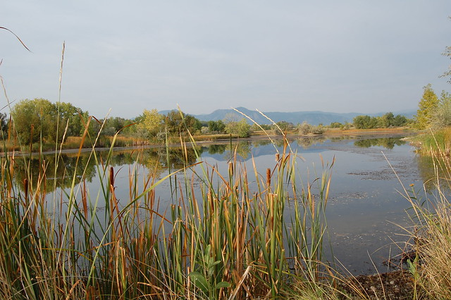 Walking at Sawhill Ponds - Boulder, CO