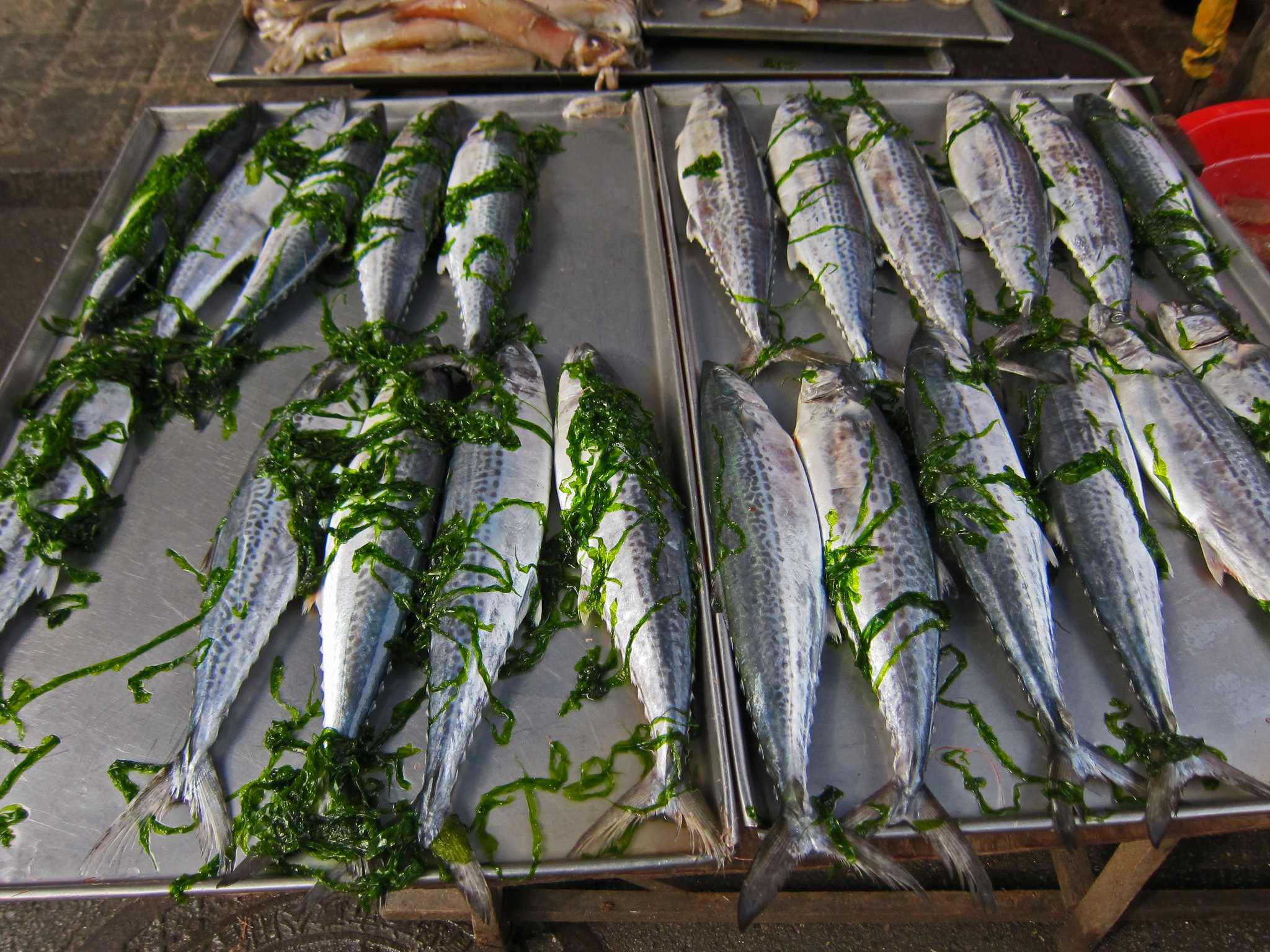 Outdoor fish market in qingdao flickr photo sharing for Bud s fish market