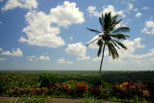 vacation sky countryside dominicanrepublic palmtree
