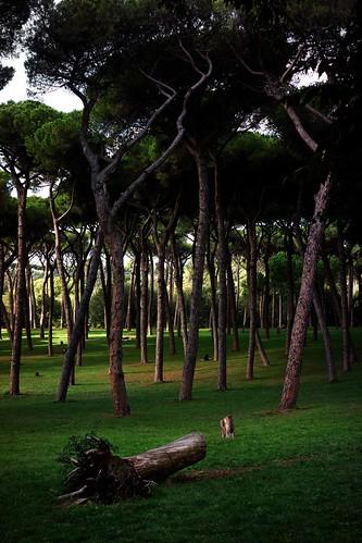 234/365(+1) by Luca Rossini