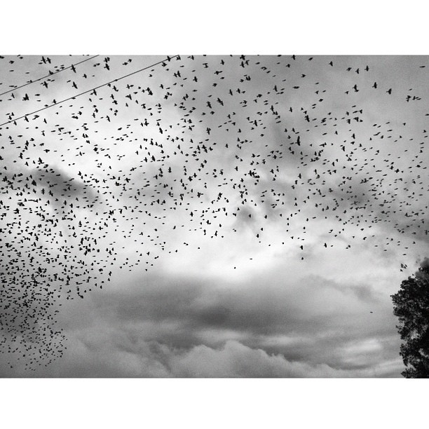 The Birds #thinkCreepy #sky #clouds #squaready